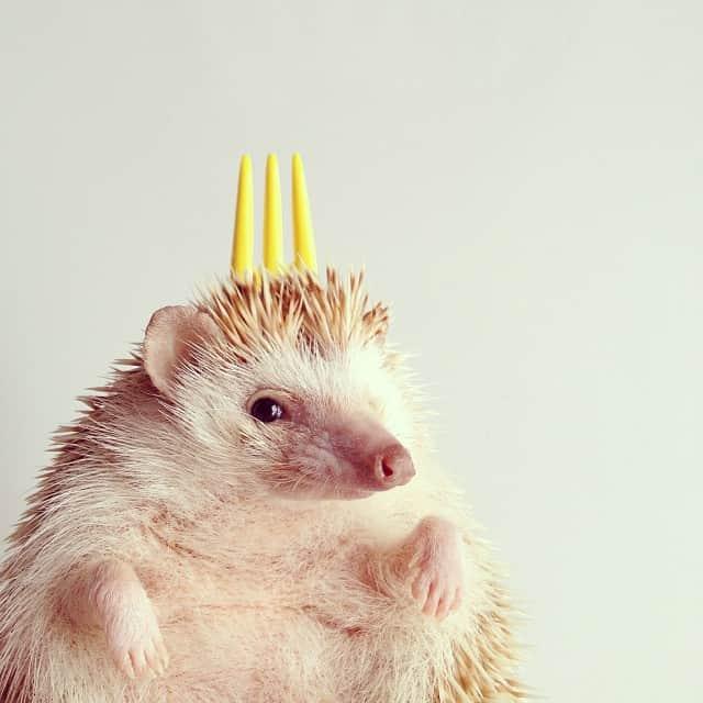 darcytheflyinghedgehog2