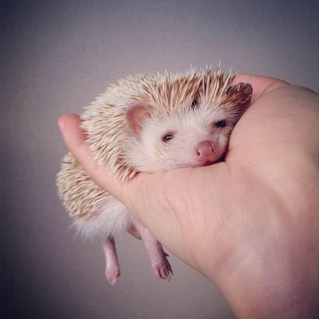 darcytheflyinghedgehog3
