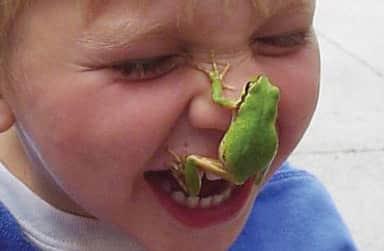 frognosewebwide2