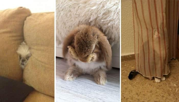 Estes 17 animais acham que estão se escondendo de você, mas estão adoravelmente falhando 1