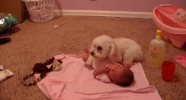 Lindo vídeo mostra cachorro protegendo bebê do barulho do aspirador de pó 3