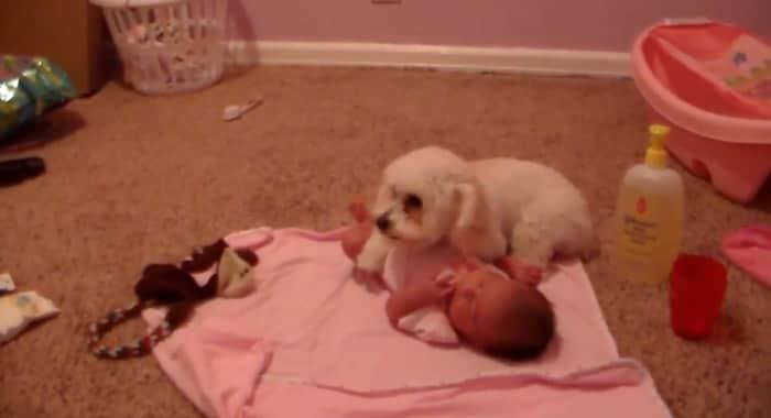 Lindo vídeo mostra cachorro protegendo bebê do barulho do aspirador de pó 1