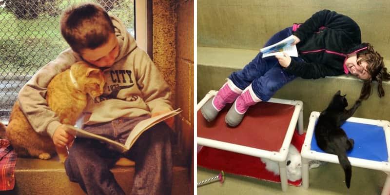 Crianças leem para gatos abandonados em abrigo e redescobrem o prazer da leitura 2