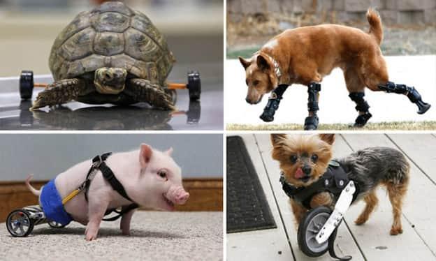 13 animais que voltaram a ter uma vida normal graças à tecnologia e ajuda dos humanos 1