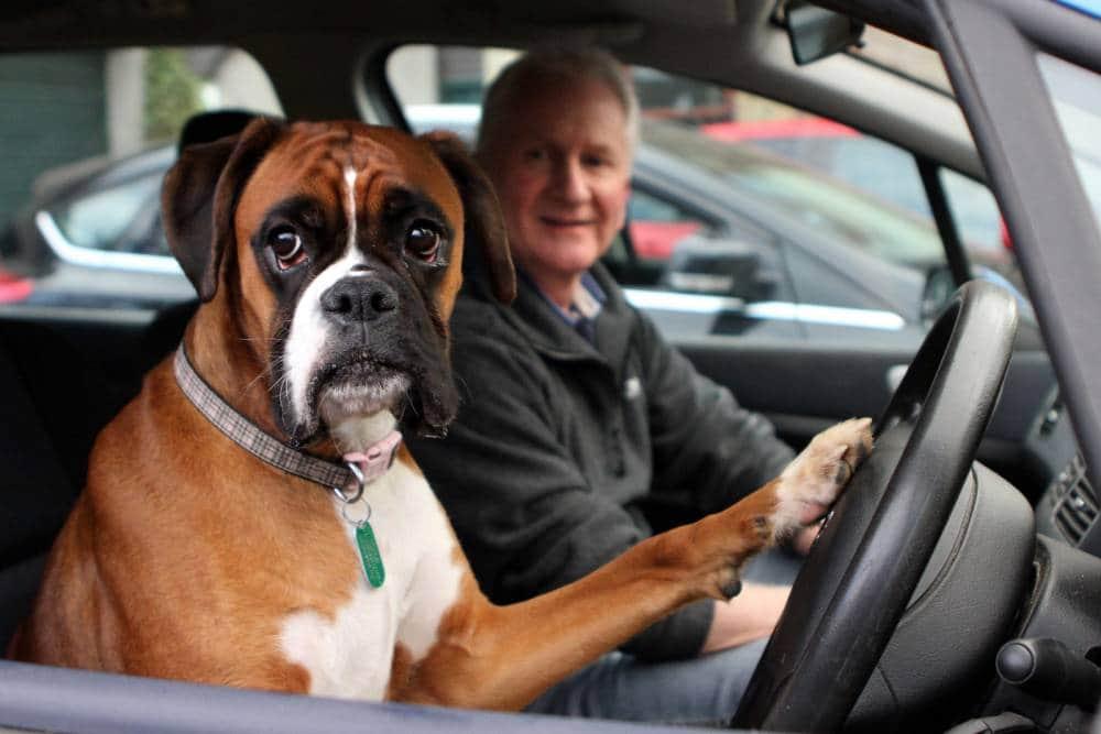 Chateada por ter sido deixada dentro do carro, cadela aperta a buzina por 15 minutos 3