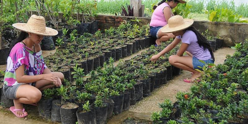 Com a prática da jardinagem, penitenciária recupera mulheres presas no Acre 3