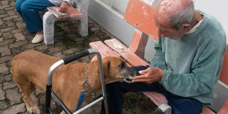 Iniciativa utiliza cães de rua para terapia de idosos em asilos 2