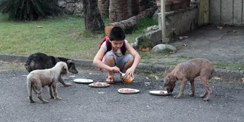 Criança emociona a todos por criar um abrigo de cães abandonados em sua garagem 2