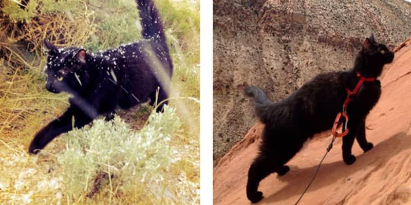 Alpinista encontrou em sua gata Millie a melhor companhia para escalada 1
