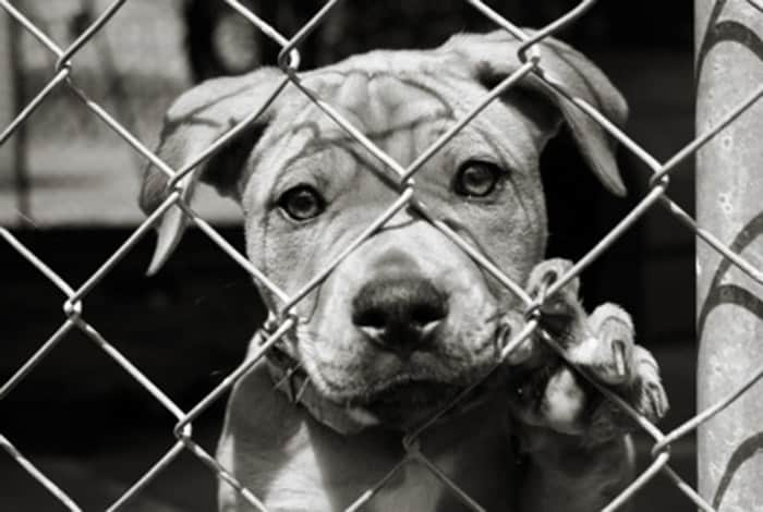 Shelter-Pet-Blog-Pic