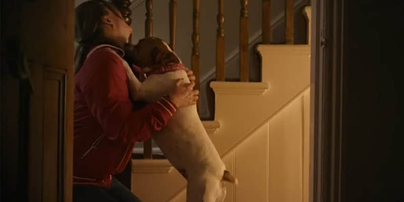 Comercial prova que os cães nos amam incondicionalmente