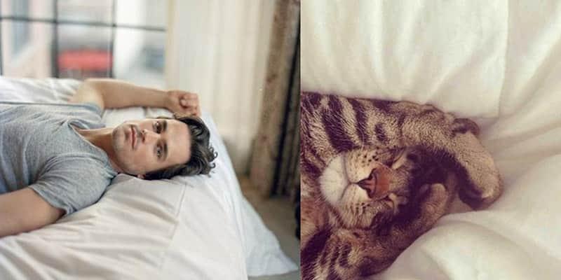 Tumblr com adoráveis fotos de gatos em posições sensuais de modelos e atores 5