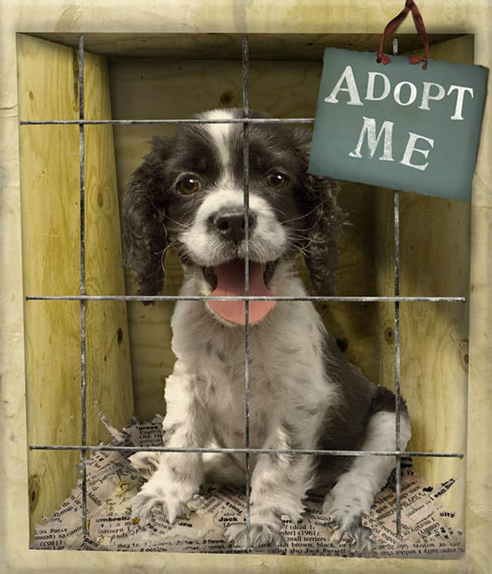 pet-with-adopt-me-sign