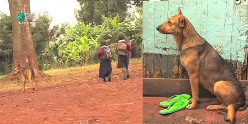 Uma cachorra que adotou crianças que foram abandonadas pela mãe alcoólatra 2