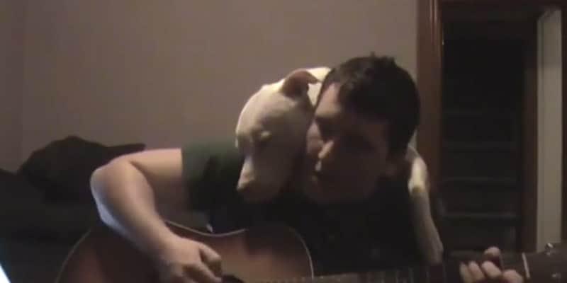 Homem toca violão para seu pit bull, que ama o som! 6