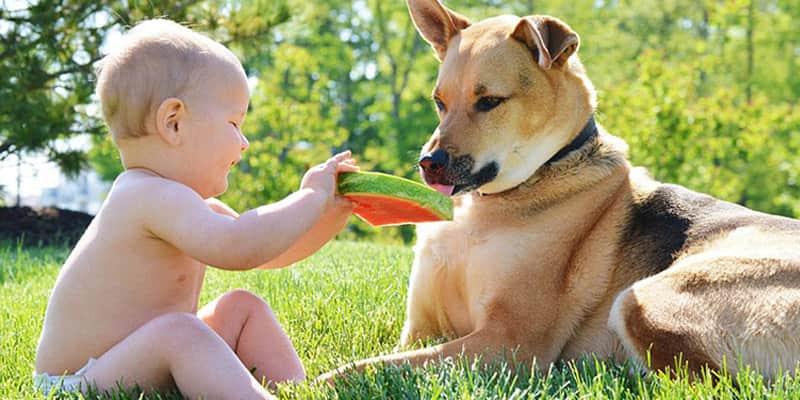 Um bebê e seu cão adotado se tornam melhores amigos e bombam na web 1