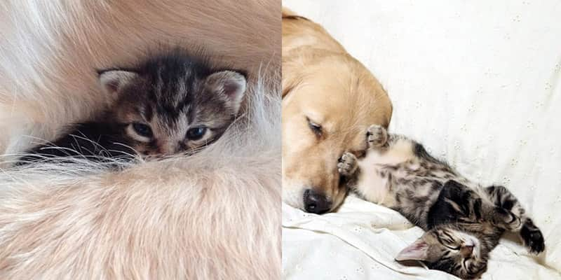 A história do cão que adotou um gatinho rejeitado pela mãe 1
