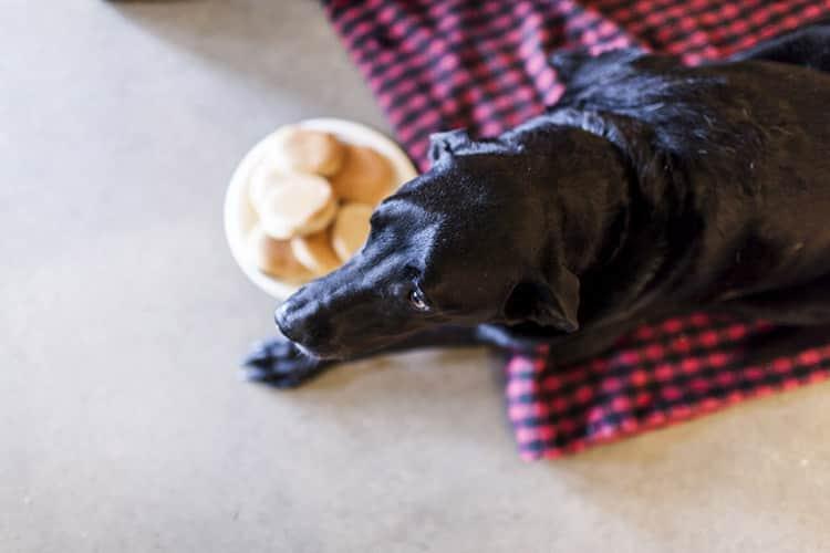duke-robyn-arouty-cachorro-ensaio-eutanasia-03