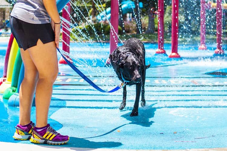 duke-robyn-arouty-cachorro-ensaio-eutanasia-15