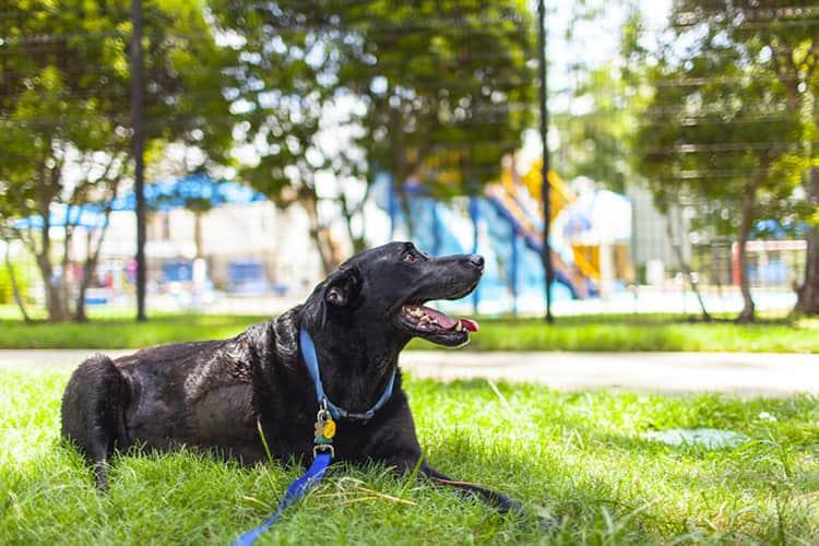 duke-robyn-arouty-cachorro-ensaio-eutanasia-17