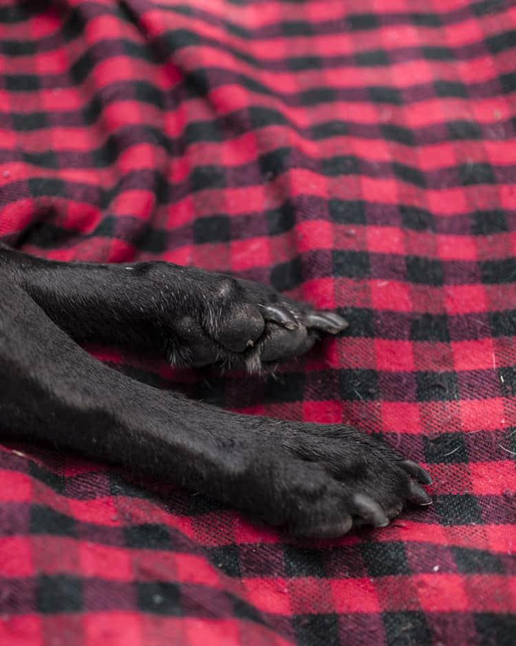 duke-robyn-arouty-cachorro-ensaio-eutanasia-24