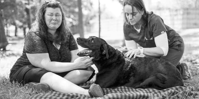 Série de fotos emocionantes mostra o último dia de vida do cão Duke