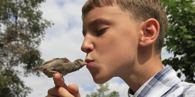 Pardal salvo por um menino de 12 anos vira amigo inseparável 1