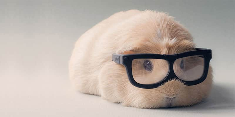 Conheçam Booboo, a porquinha-da-índia mais cativante dos últimos tempos 1