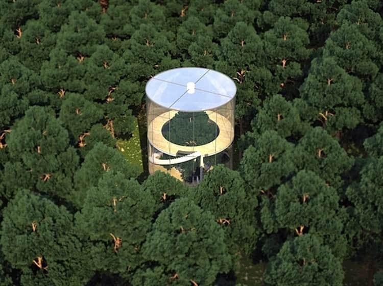 treeinthehouse-1