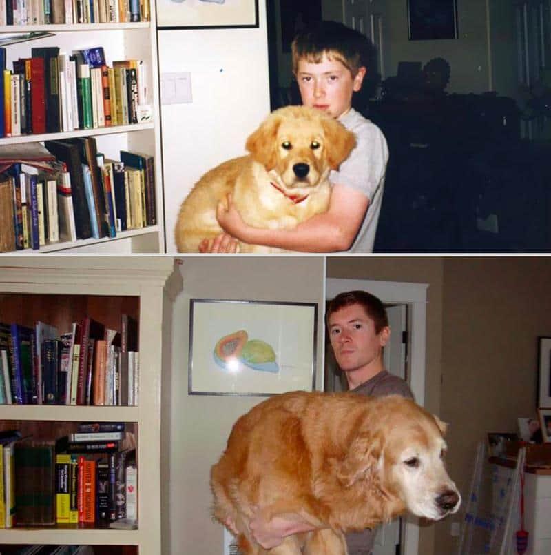 antes-depois-animais-6