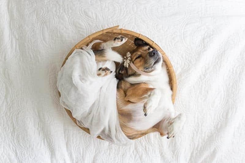 baby-dog-12