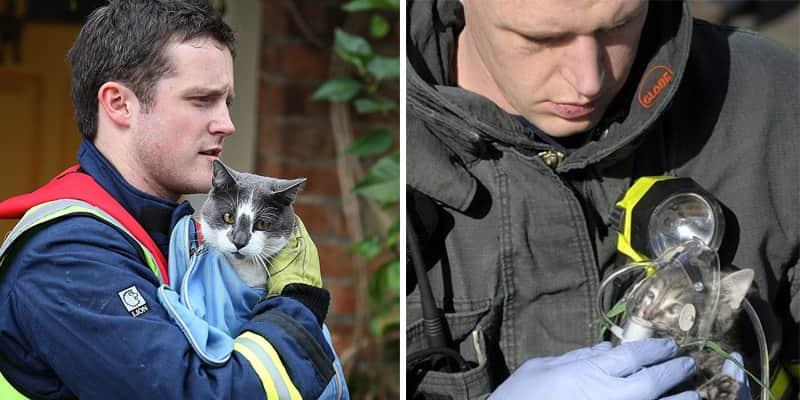 15 imagens de gatos que foram salvos por bombeiros 4