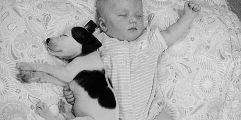 O bebê e o Pit Bull que conquistaram o coração dos internautas 1