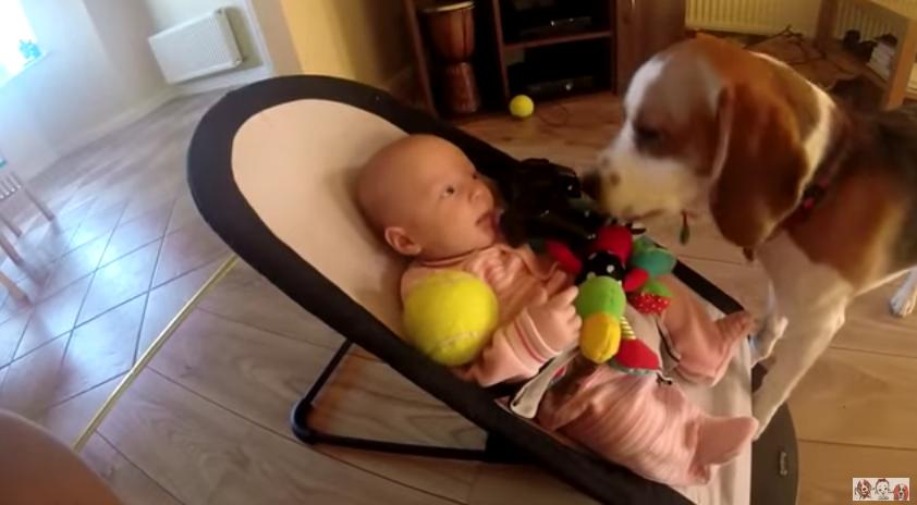 Cão se sente culpado por ter roubado brinquedo de bebê e pede desculpas de forma adorável 2