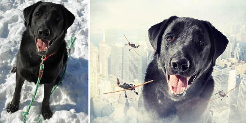 Fotógrafo cria montagens surreais com cachorros abandonados para incentivar doação 1