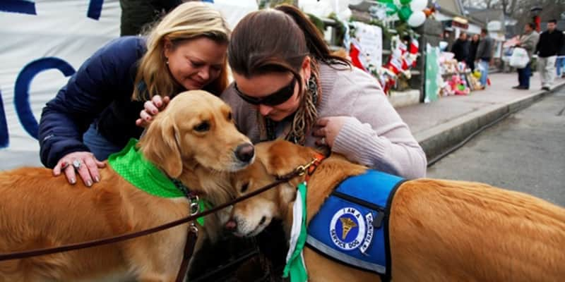 Terapia com cães levam conforto às pessoas em processo de luto 2