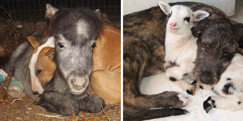 Refúgio nos EUA abriga a linda amizade entre 60 animais 1