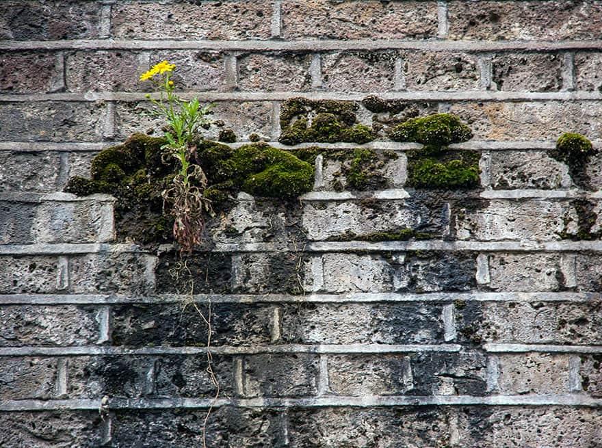 planta 16