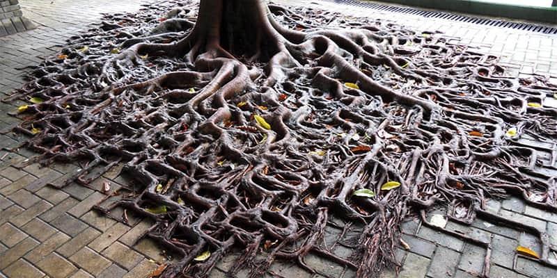 A vida encontra uma maneira: 25 plantas que não desistiram e lutaram para viver 1