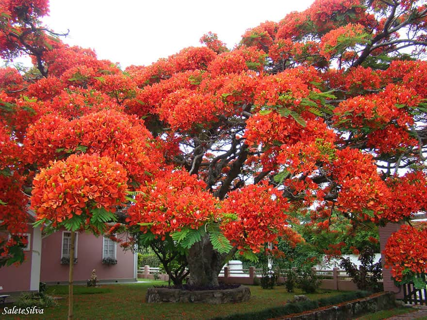 trees 11