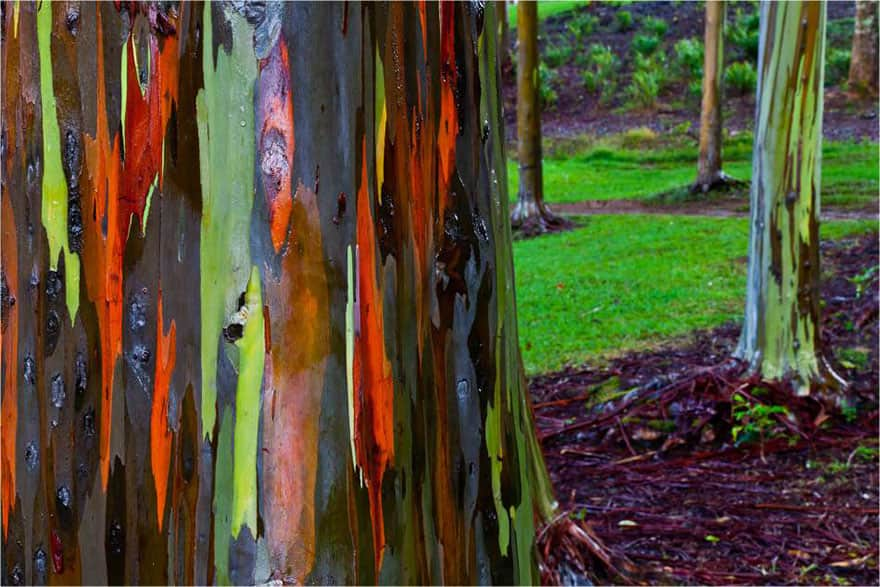 trees 16