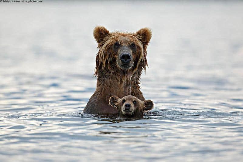 urso-filhote-1