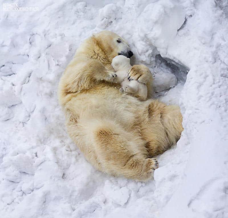 urso-filhote-10
