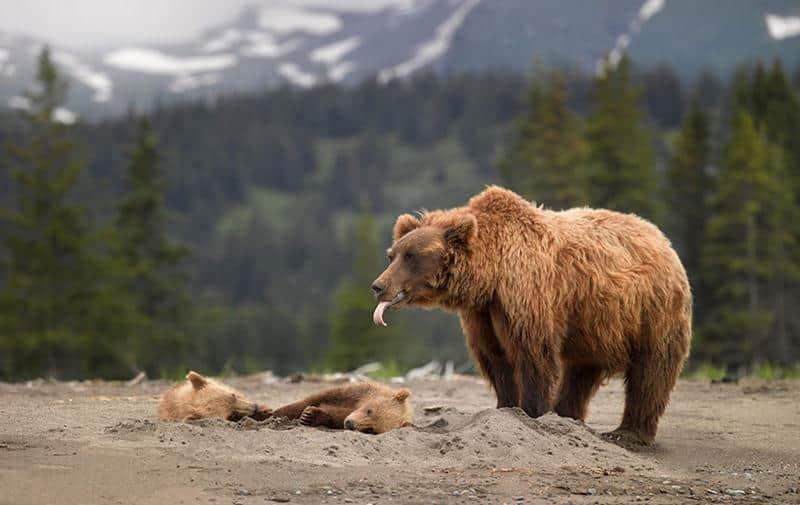 urso-filhote-11