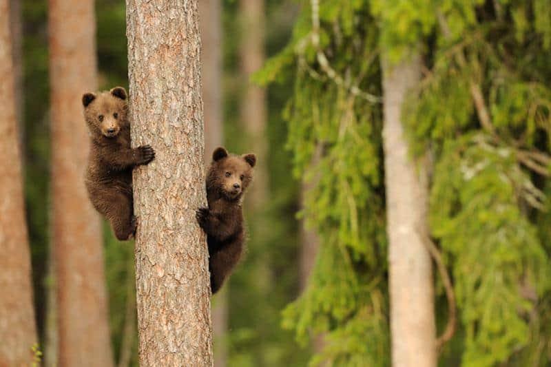 urso-filhote-12