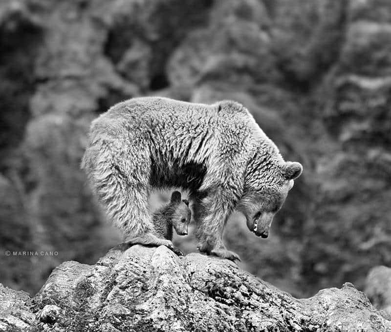 urso-filhote-13