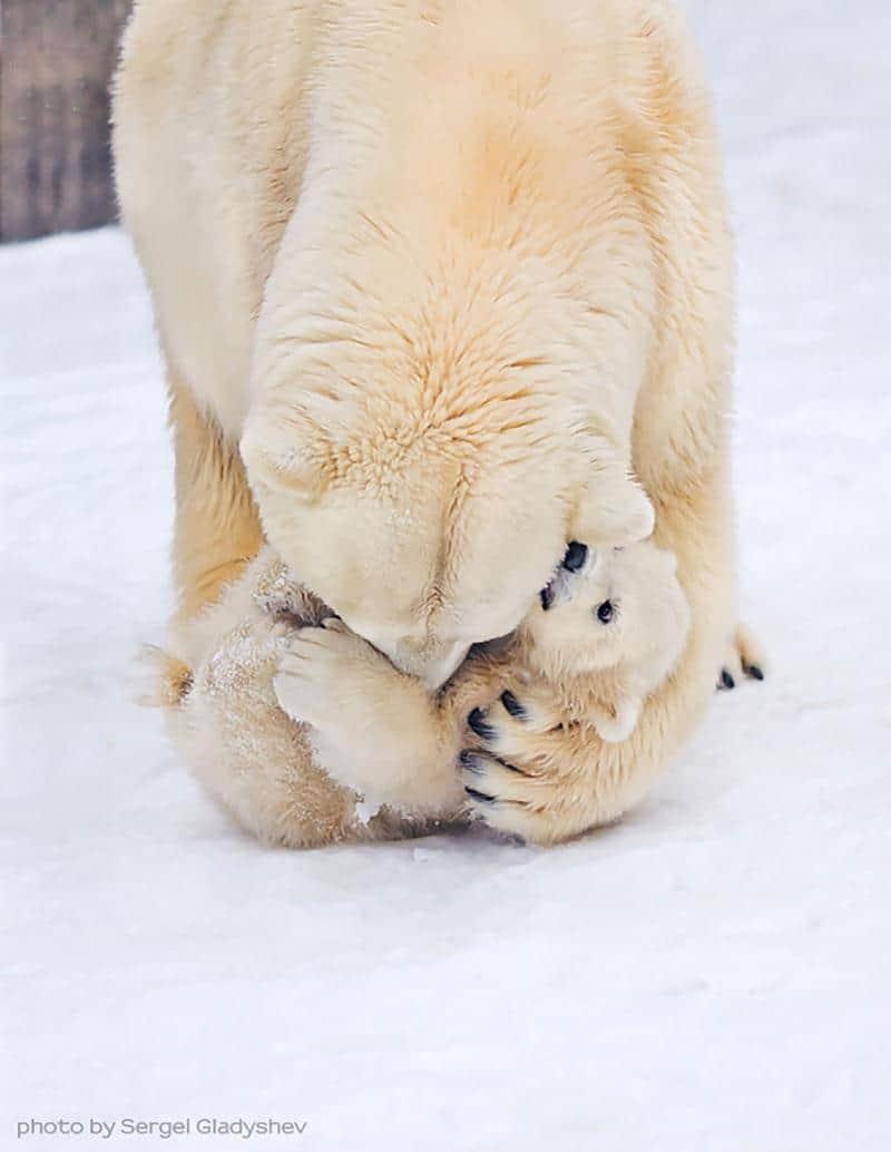 urso-filhote-14