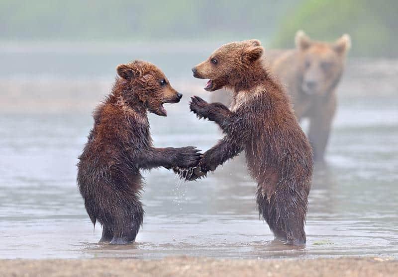 urso-filhote-15