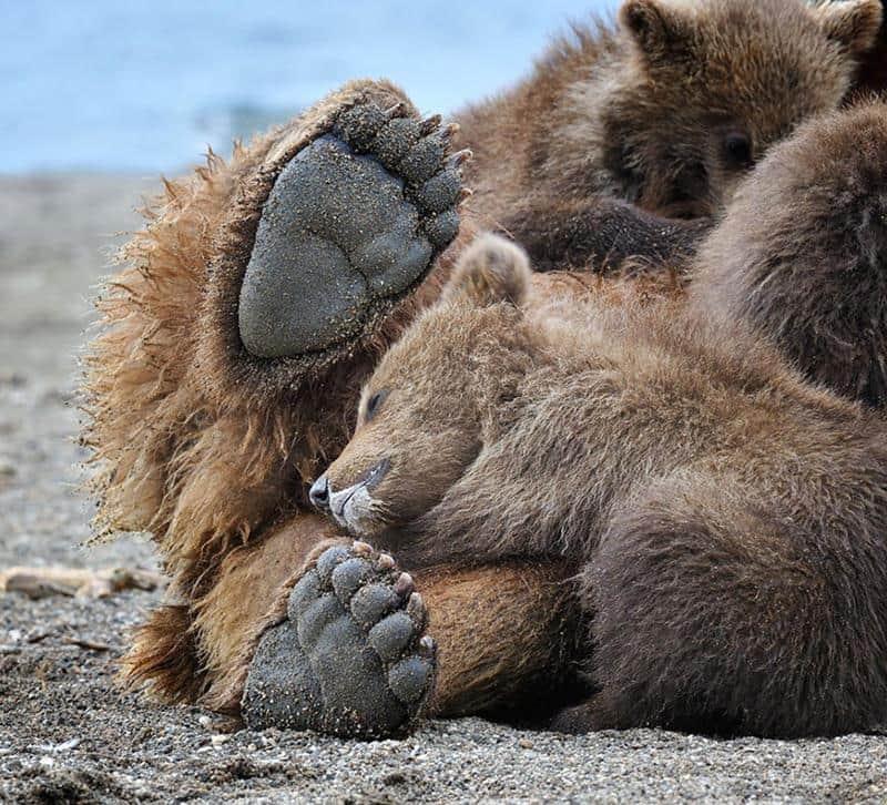 urso-filhote-16