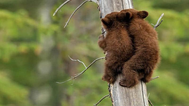 urso-filhote-17